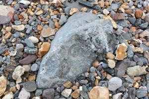 Jurassic Coast - Found a Fossil 3