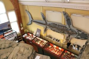 Jurassic Coast - Lyme Regis Museum 2